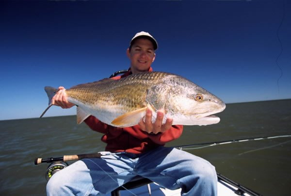 Redfish the venturing angler for Fishing license in louisiana