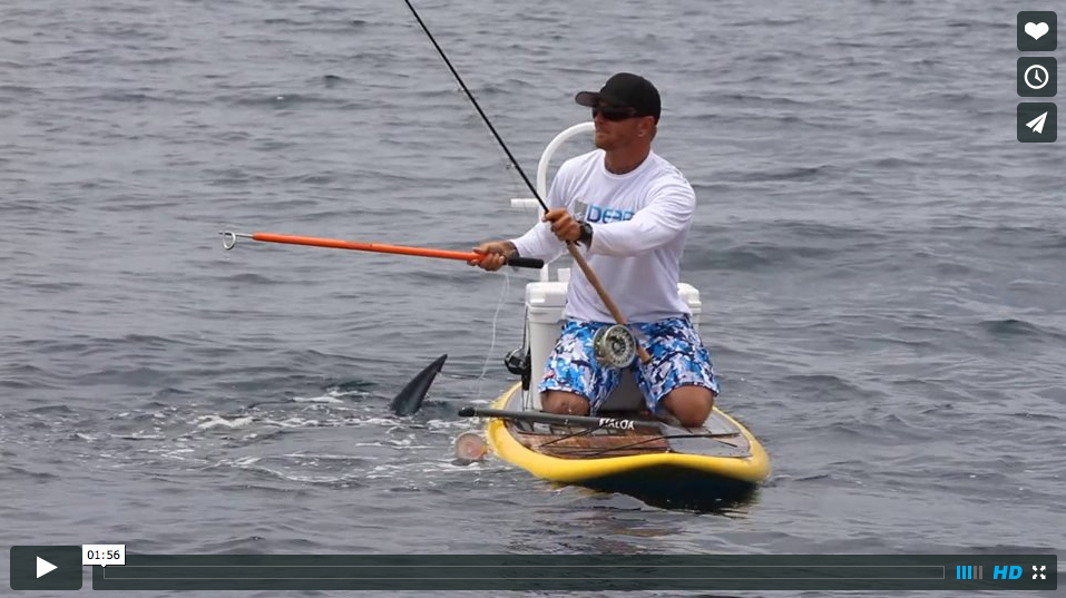 Video fly fishing for mako sharks from sup the for Fly fishing paddle board