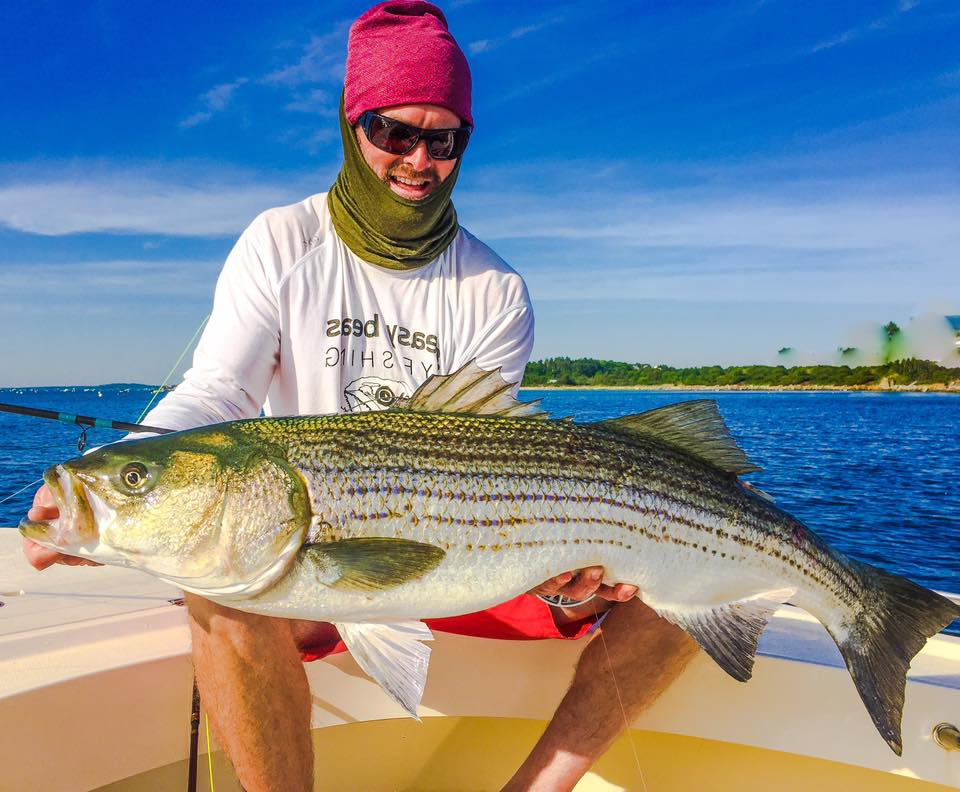 Fly Fishing Photo Massachusetts Striped Bass On The Fly